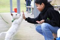 Kid-hi-fives -a-dog, Non-verbal-Communication